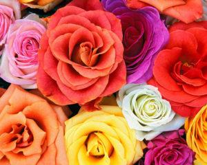 105246_rosas